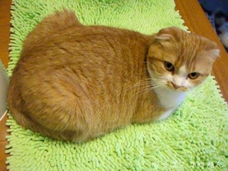 そんなに太ってないし