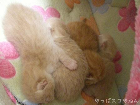 みんなおやすみ♪