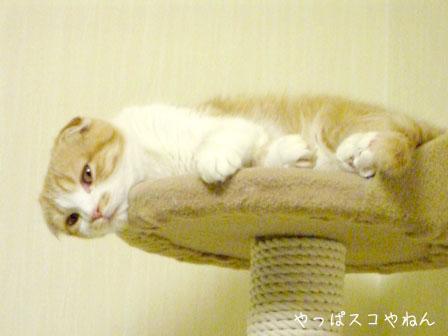 眠いでつ。。。