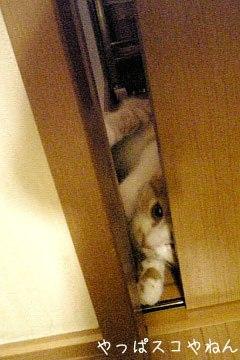 ドアが開かないのよぅ