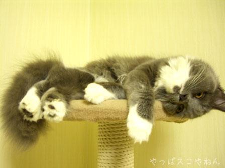 あぁでも眠い