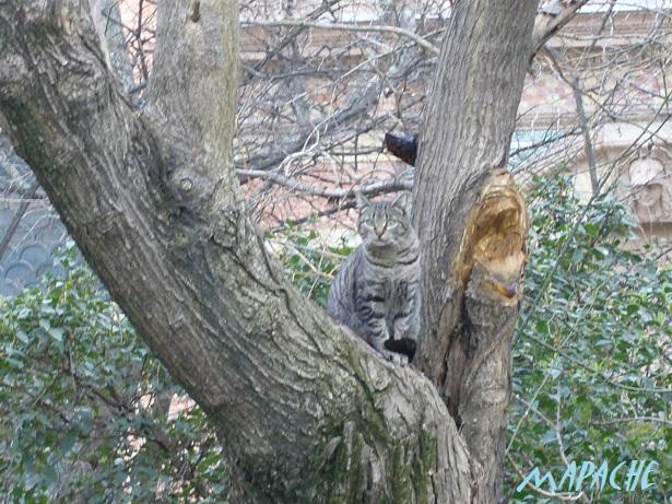 0602P1010523Retiro gato レティーロ猫