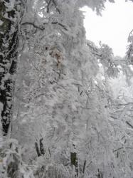 風で凍る木