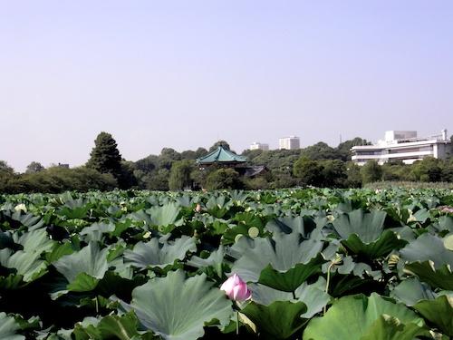 20100825-01