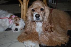 2008.1.31アリス&シェリー2