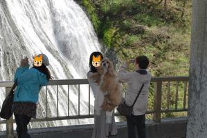 10.4.25アリス滝