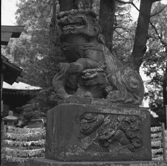 kitsuki-anews.jpg