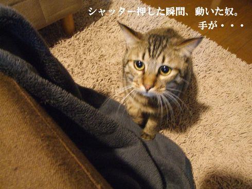 04_20091130234635.jpg