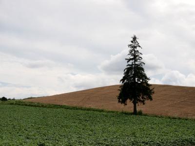122.クリスマスの木2