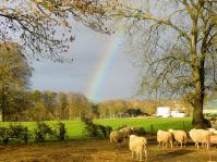 sheepandrainbow