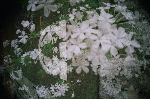 LCA+ 花と道路