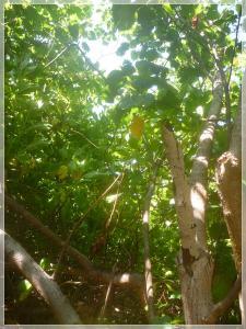 2010-03-04 ジャングルの中