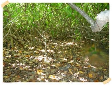 2010-03-04 ジャングル