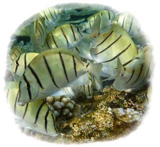 2010-03-04 お魚