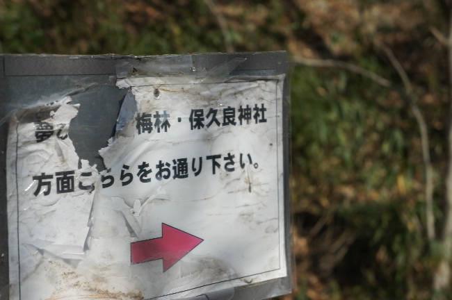 コピー ~ DSC04467