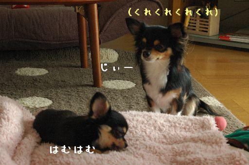 3_20091221131441.jpg