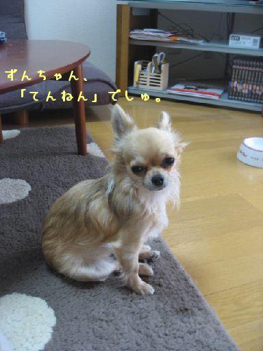 IMG_4795_2.jpg