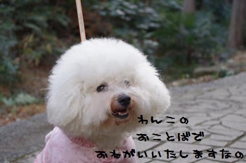 2011_0126_154850-IMGP5025.jpg