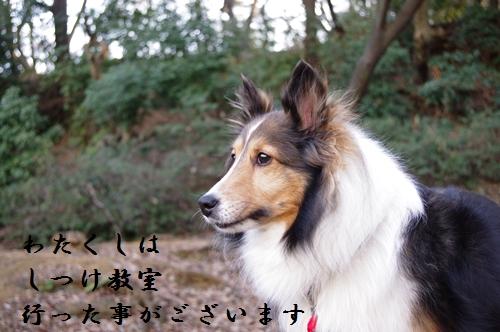 2011_0126_160000-IMGP5072.jpg
