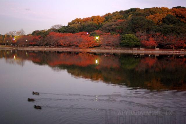 kouyoukouen1.jpg