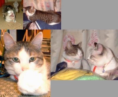猫 コロスケ1
