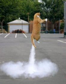 猫頭トレーニング日記-image0167.jpg