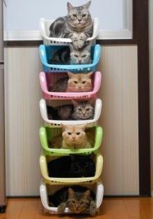 猫頭トレーニング日記-image0204.jpg