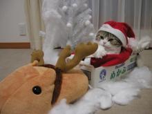 猫頭トレーニング日記-image0210.jpg