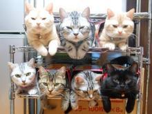 猫頭トレーニング日記-image0205.jpg