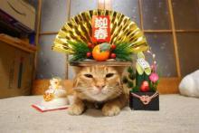 猫頭トレーニング日記-image0220.jpg