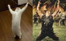 猫頭トレーニング日記-image0107.jpg