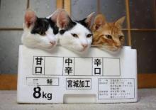 猫頭トレーニング日記-image0121.jpg