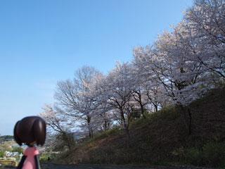 桜、まだまだイケるっ(`・ω・´)