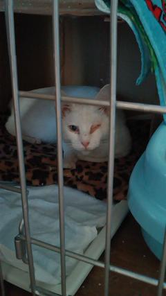 白猫ちゃん1