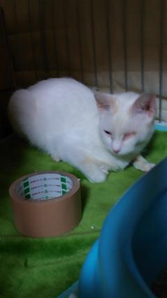 白猫ちゃん4