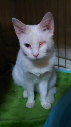 白猫ちゃん3