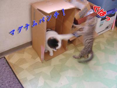 2010062605.jpg