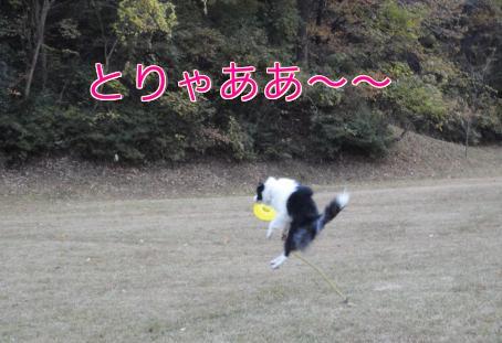 11q_20101112210754.jpg