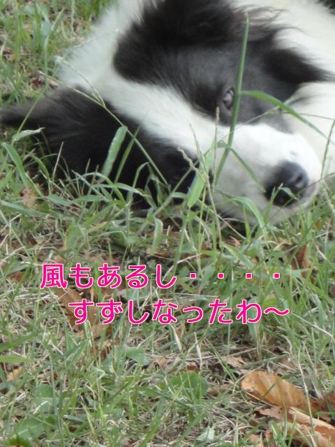 12u_20100919152633.jpg