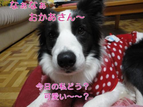 141_20110214184945.jpg