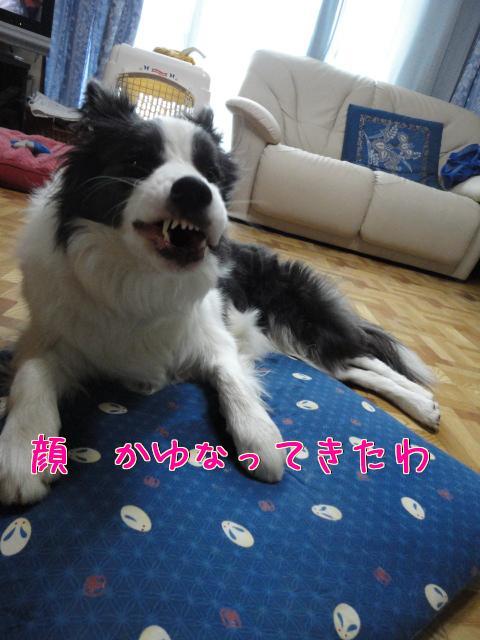 176_20100418084829.jpg