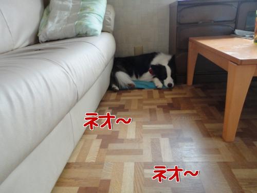 1a_20100805214644.jpg