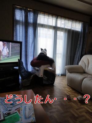 1f_20100808194036.jpg