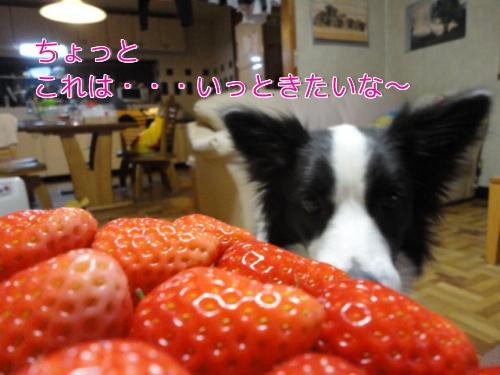 2612_20110126204929.jpg