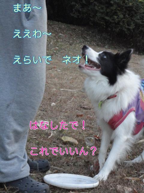 26_20101202204246.jpg