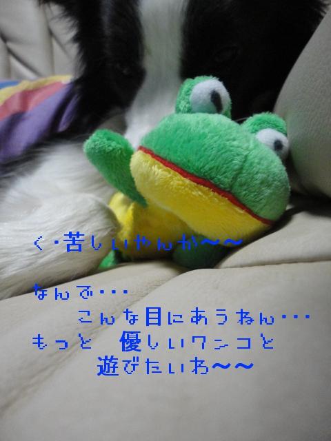 284_20101128195232.jpg