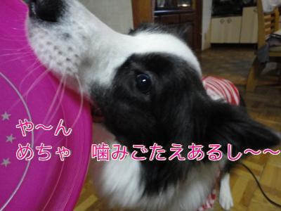 286_20101229192602.jpg