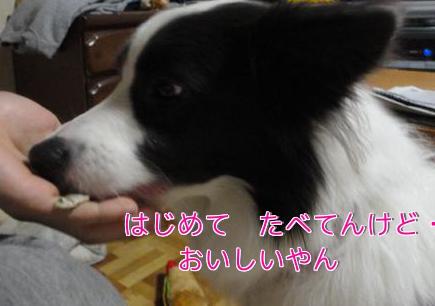 287_20101128195233.jpg