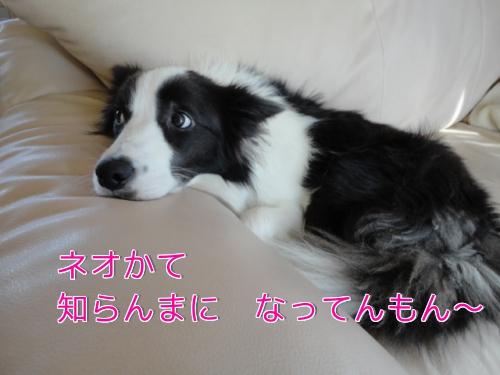 2w_20101107085221.jpg