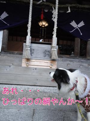 35_20110103202051.jpg